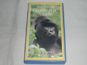 【VHS】 NATIONAL GEOGRAPHIC VIDEO 野生のゴリラ 中古